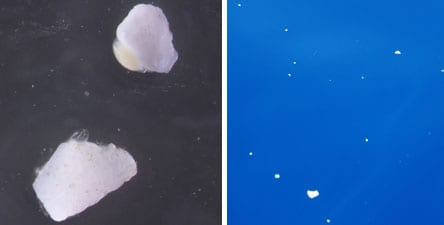 LEFT: Examples of a not-yet-hatched sea skater (Halobates sericeus) egg (top), about the size of a grain of rice, and a hatched egg (bottom). Photo credit: Miriam Goldstein, Scripps Institution of Oceanography at UC San Diego. RIGHT: SEAPLEX researchers collected an alarming amount of small bits of broken down plastic floating across thousands of miles of open ocean. Photo credit: Scripps Institution of Oceanography at UC San Diego